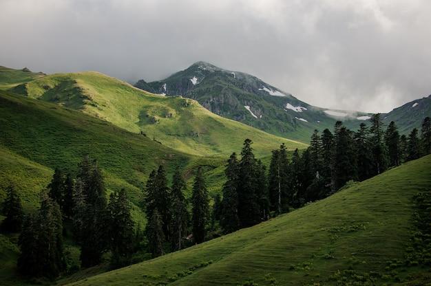 Paisagem das colinas com as árvores e o céu nublado