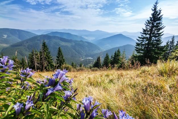 Paisagem das montanhas dos cárpatos com flores em primeiro plano.