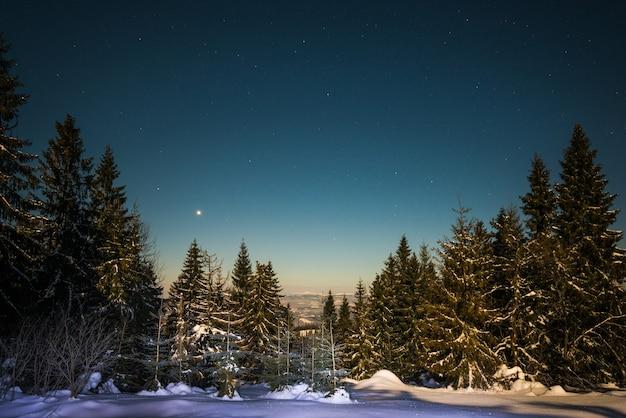 Paisagem de altos pinheiros nevados crescendo entre montes de neve no céu estrelado