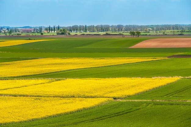 Paisagem de área verde e amarela de plantas