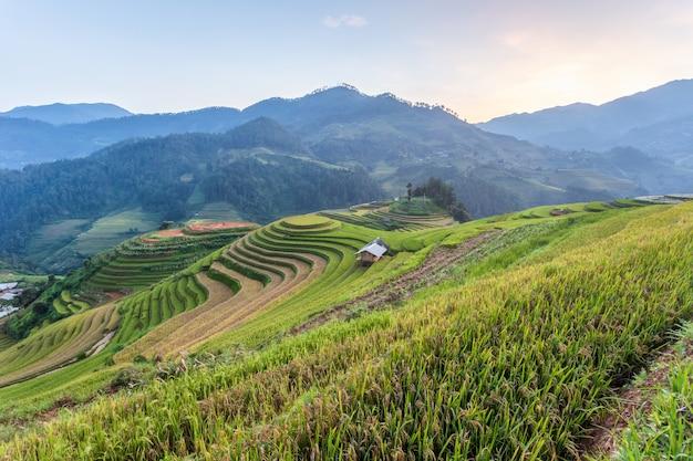 Paisagem de arrozal em socalcos de mu cang chai, yenbai, norte do vietnã