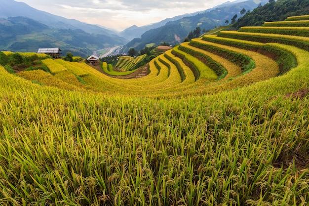Paisagem de arrozal em socalcos de mu cang chai