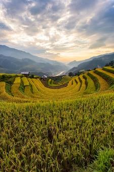 Paisagem de arrozal em socalcos de mu cang chai Foto Premium