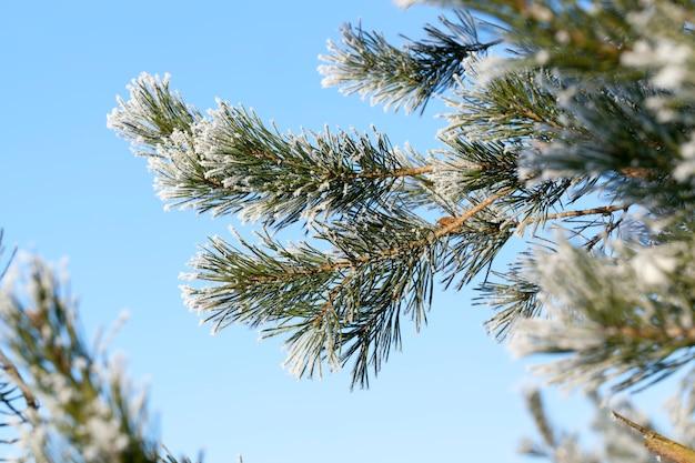 Paisagem de árvore de inverno