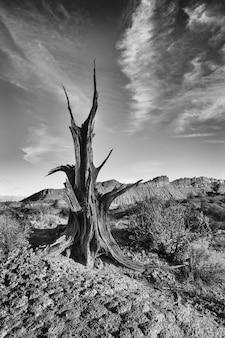 Paisagem de árvore velha perto de kanab utah