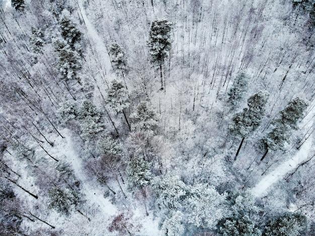 Paisagem de árvores cobertas de neve