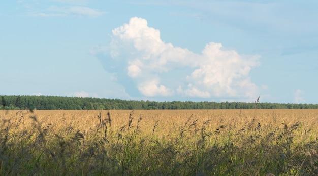Paisagem de campo agrícola com floresta e nuvens