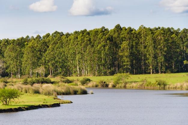 Paisagem de campo com reflorestamento de córrego e eucalipto em federacion entre rios argentina