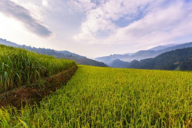 Paisagem de campo de arroz em terraços de mu cang chai