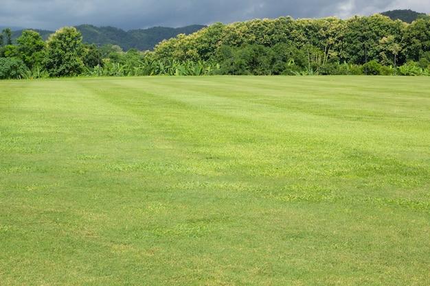 Paisagem de campo de grama verde e céu com montanha