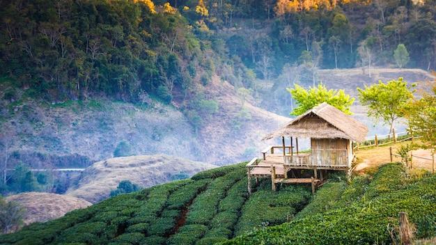 Paisagem de campo de plantação de chá na montanha