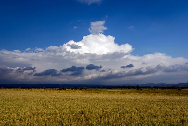 Paisagem de campo de trigo com nuvens ameaçando tempestade