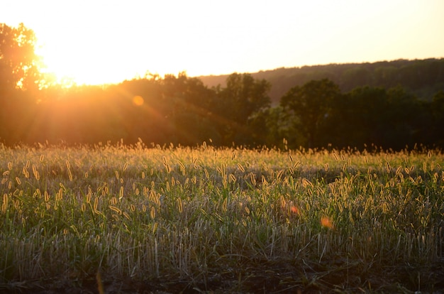 Paisagem de campo durante o pôr do sol depois de queimar a grama do ano passado