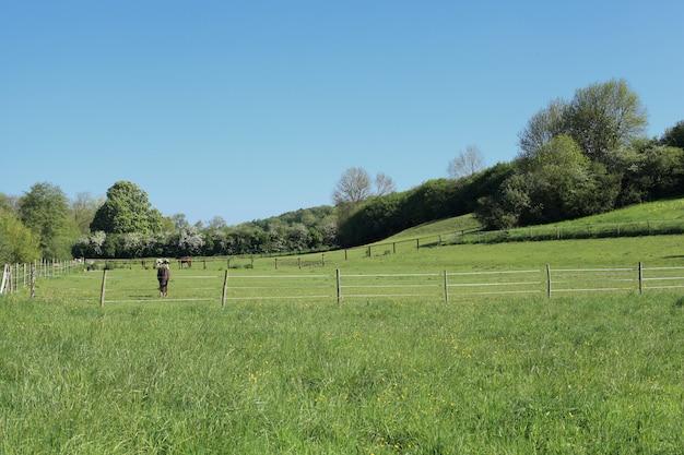 Paisagem de campo ensolarado com cavalos na primavera