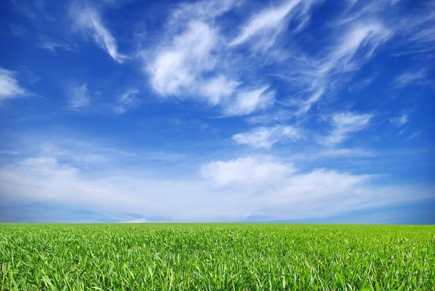 Paisagem de campo verde e céu azul, vista para o horizonte