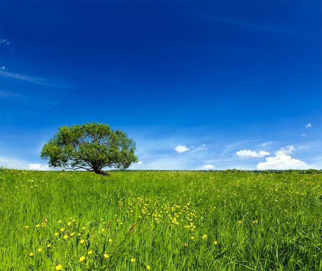 Paisagem de campo verde verão primavera paisagem com única árvore