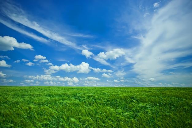Paisagem de campos com culturas contra o céu azul