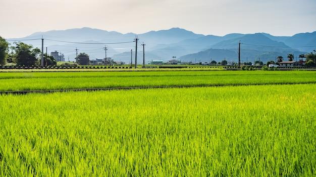 Paisagem de campos de arroz no condado de yilan, taiwan oriental.