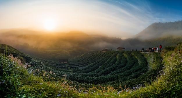 Paisagem, de, chá, campo, com, nevoeiro, em, manhã, em, chiangmai, tailandia