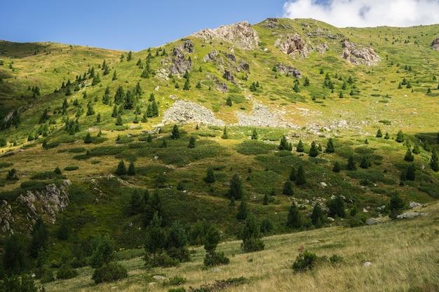 Paisagem de colinas cobertas de grama e árvores sob um céu nublado e luz do sol durante o dia