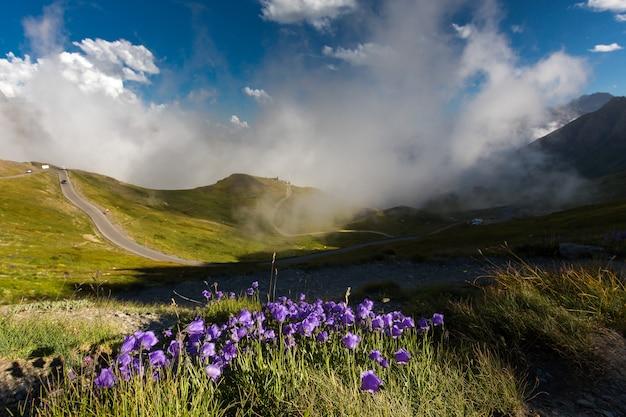 Paisagem de colinas cobertas de grama e flores sob um céu nublado e luz do sol