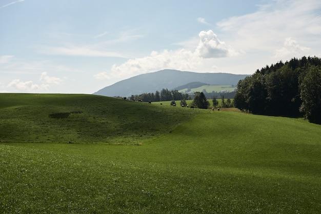 Paisagem de colinas cobertas de verde sob a luz do sol e um céu nublado no campo