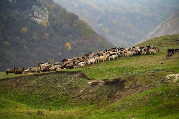 Paisagem de colinas com ovelhas pastando