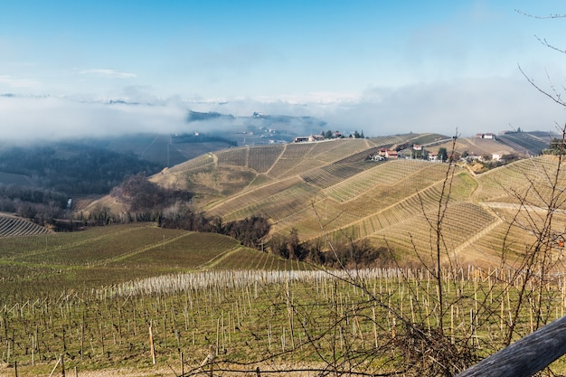 Paisagem de colinas com vinhedos, neblina e montanhas cobertas de neve