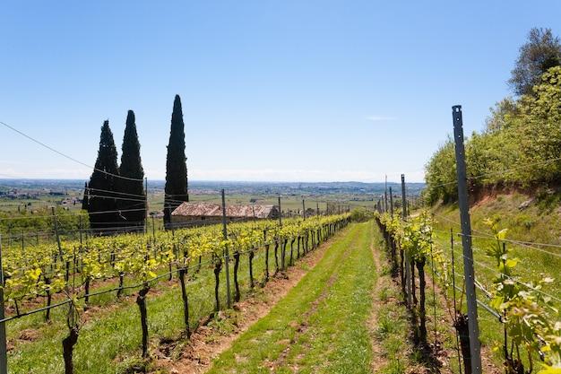 Paisagem de colinas valpolicella, área de viticultura italiana, itália. paisagem rural