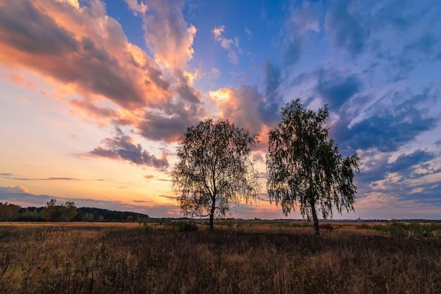 Paisagem de duas bétulas em um campo ao pôr do sol