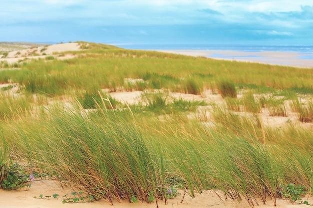 Paisagem de dunas de grama e areia na praia selvagem