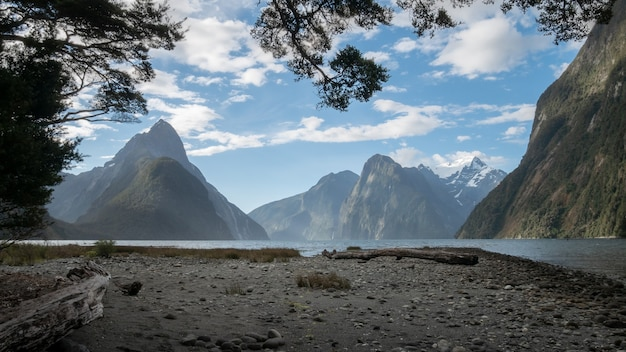 Paisagem de fiorde emoldurada por galhos de árvores durante o dia ensolarado milford sound fiordland nova zelândia