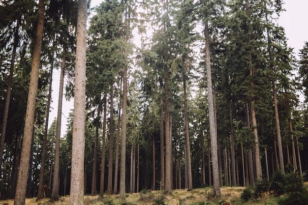 Paisagem de floresta cercada por árvores altas