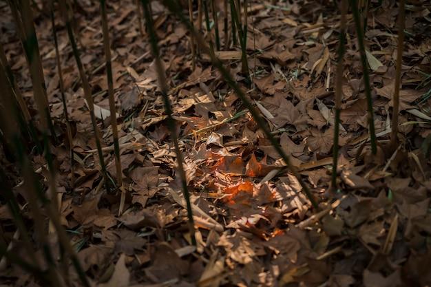 Paisagem de floresta de bambu