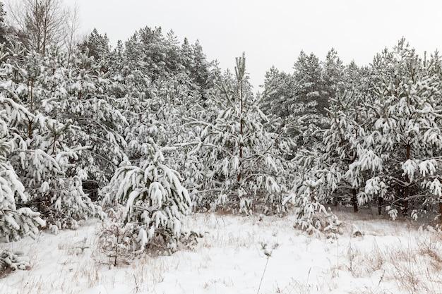 Paisagem de floresta de inverno