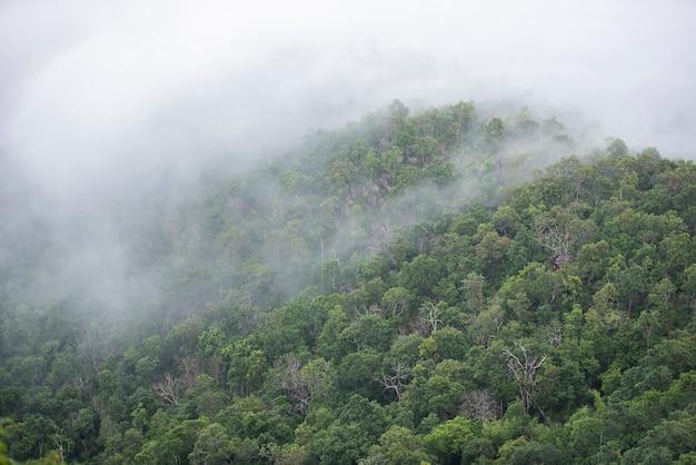 Paisagem de floresta de montanha enevoada pela manhã