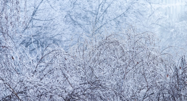 Paisagem de galhos de árvores cobertos de geada durante o inverno em zagreb, na croácia
