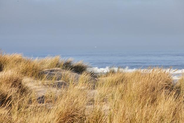 Paisagem de grama de praia pela manhã em cannon beach, oregon