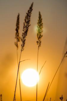 Paisagem de grama na maravilhosa luz do sol