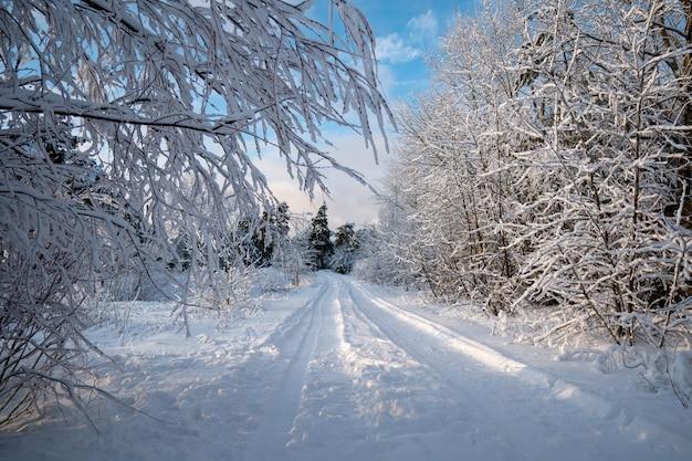Paisagem de inverno à noite. estrada na floresta. drifts. frio