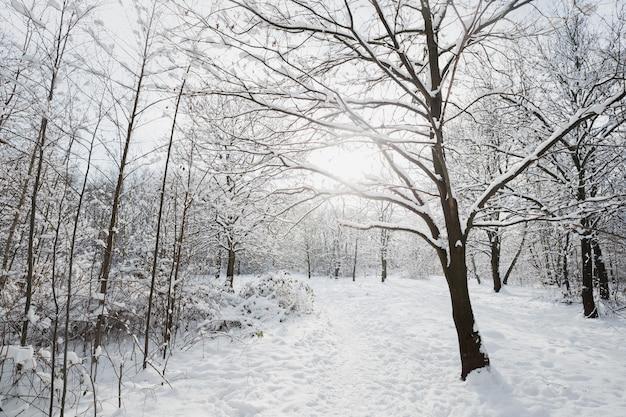 Paisagem de inverno, árvores geladas em uma floresta de neve sob a luz do sol, geadas cintilantes nos galhos de uma floresta de inverno em um dia gelado