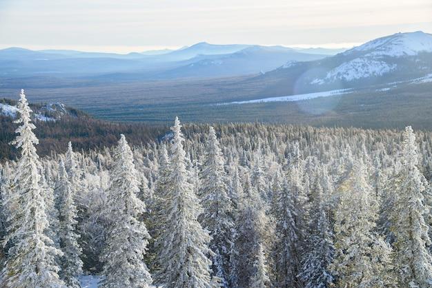 Paisagem de inverno. bosque nevado nas montanhas