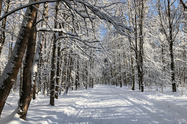 Paisagem de inverno com estrada de neve pela floresta