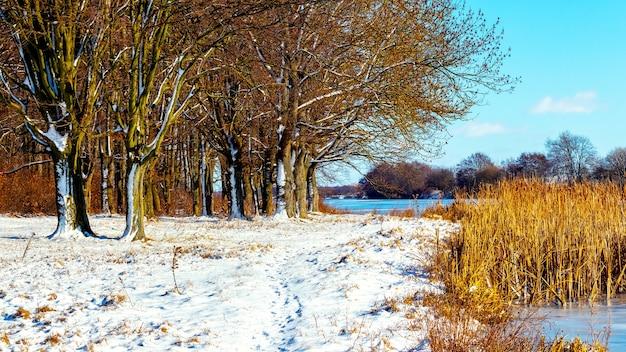 Paisagem de inverno com floresta à beira do rio em um dia ensolarado