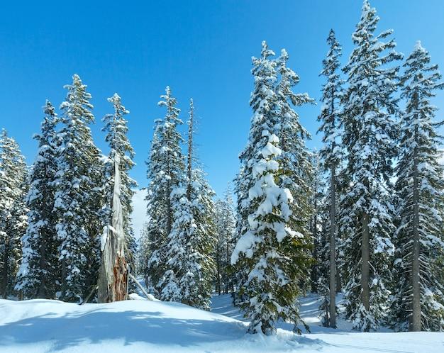 Paisagem de inverno com floresta de abetos e neve (topo de papageno bahn - filzmoos, áustria)