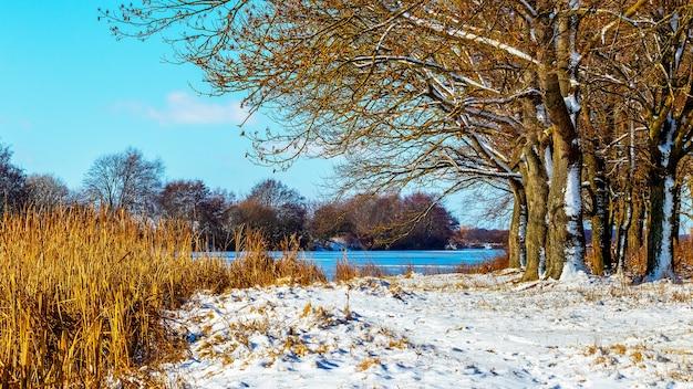 Paisagem de inverno com floresta na margem do rio em um dia ensolarado