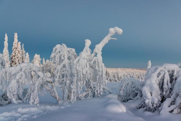 Paisagem de inverno com neve coberta de árvores na floresta de inverno