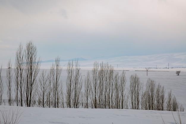 Paisagem de inverno com neve e muitas árvores simétricas