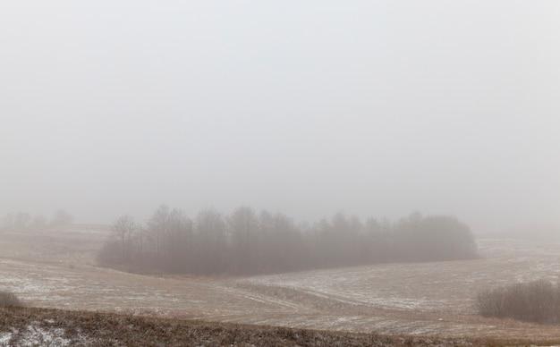 Paisagem de inverno com nevoeiro