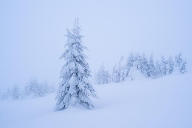 Paisagem de inverno com pinheiro nevado. vista de natal. beleza na natureza. tonificação de cor